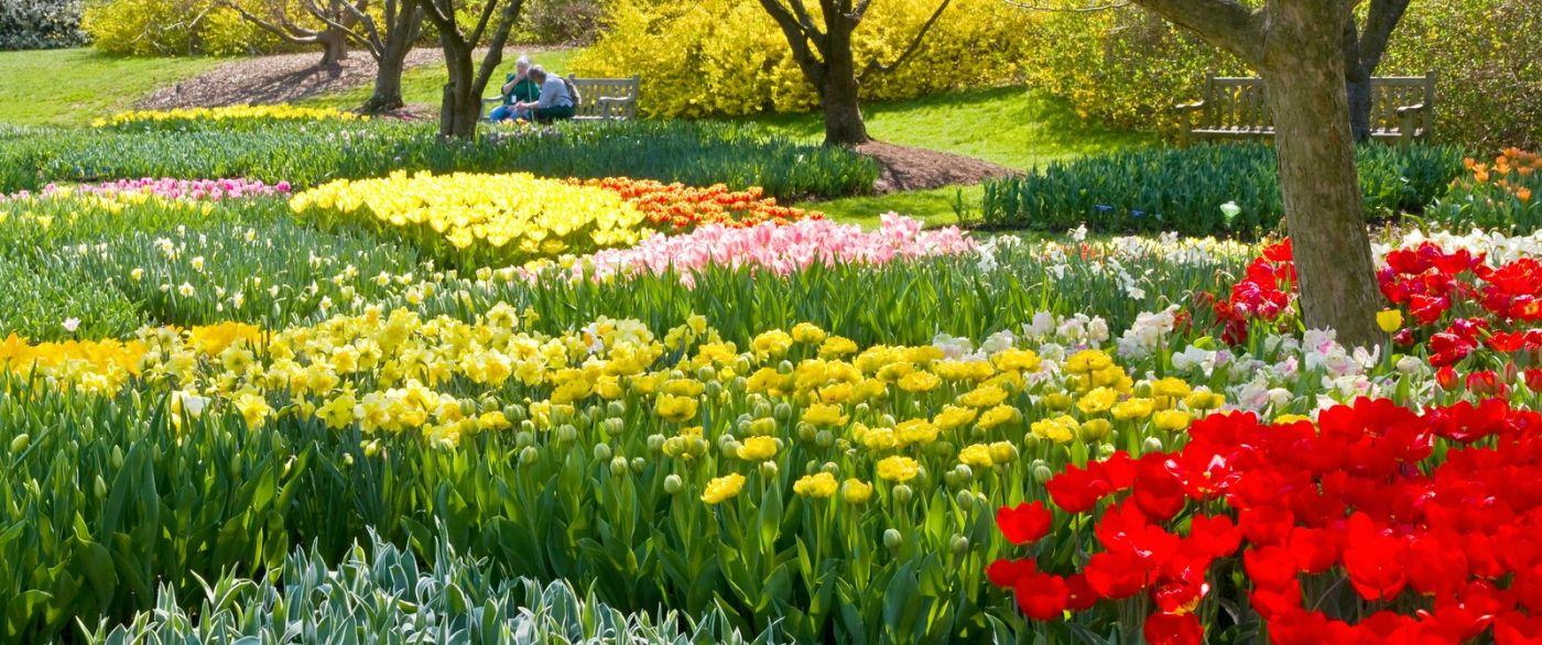 宾州长木公园,缤纷亮丽的郁金香_图1-8