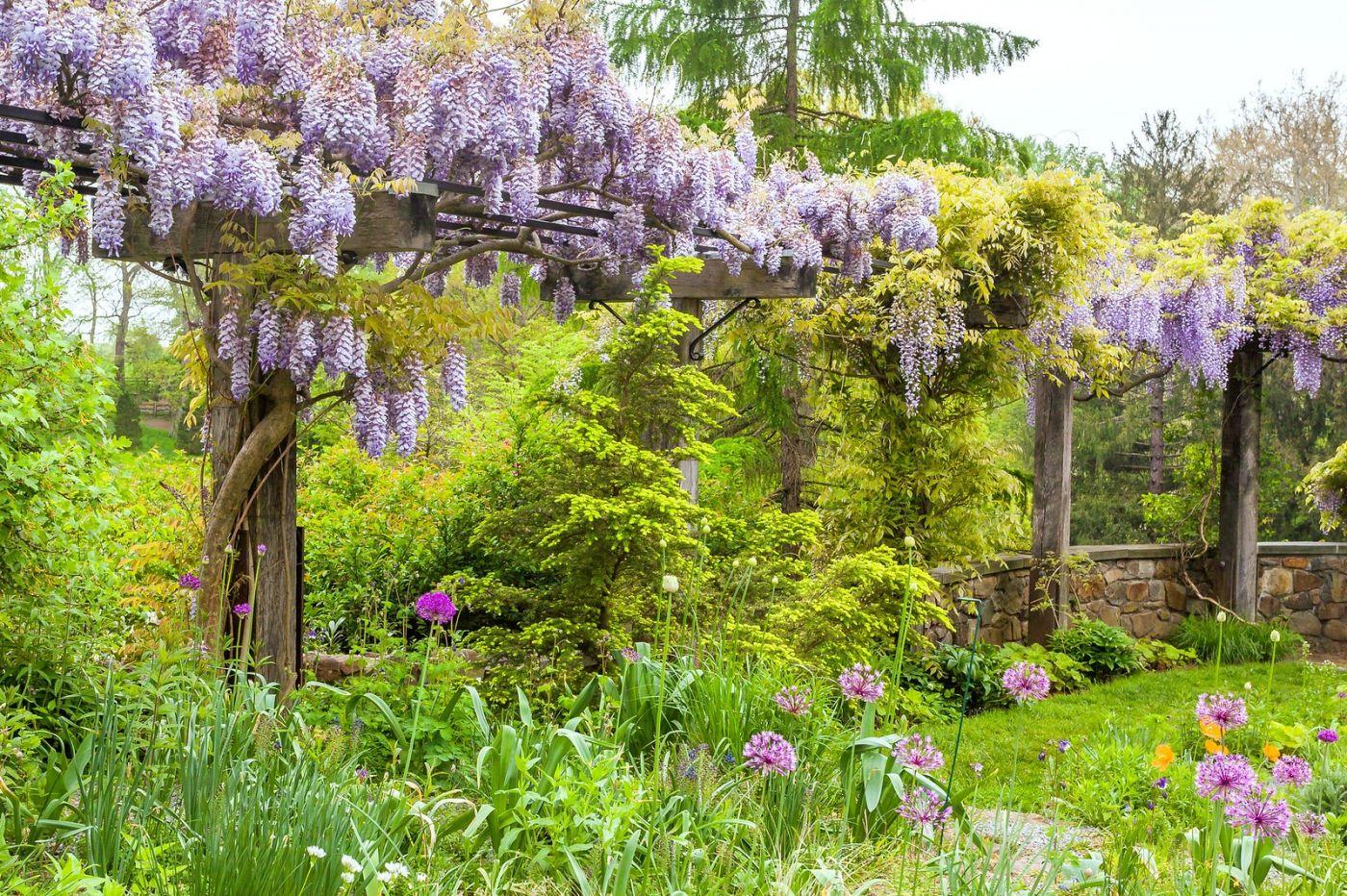 紫藤花相遇在春天_图1-15