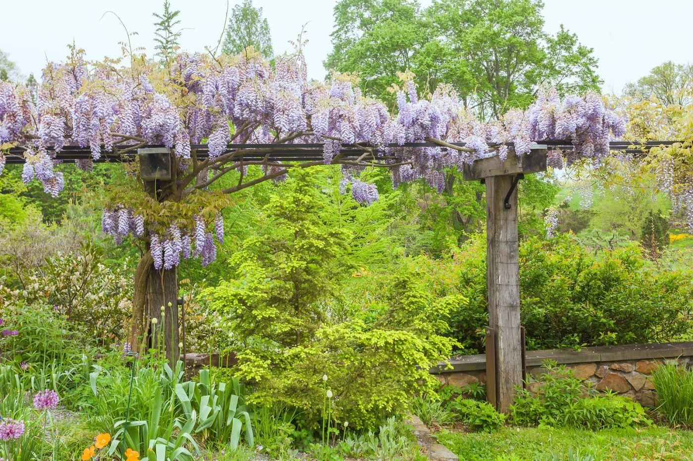 紫藤花相遇在春天_图1-18