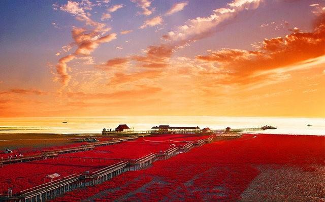 中国红海滩_图1-1