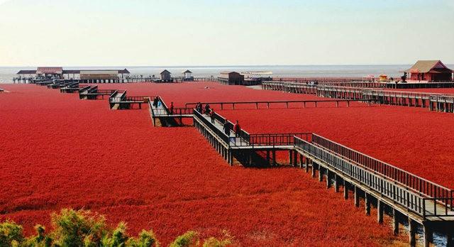 中国红海滩_图1-2