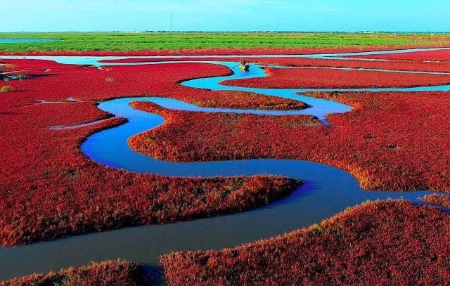 中国红海滩_图1-3