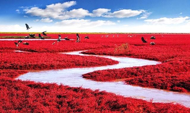 中国红海滩_图1-4