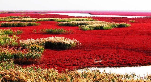 中国红海滩_图1-8