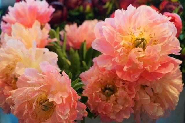 五月春--2_图1-6