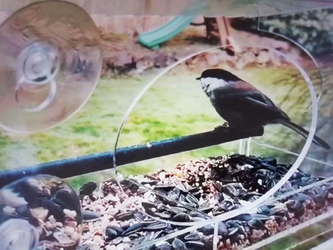 女儿家买了个新式鸟笼子_图1-1