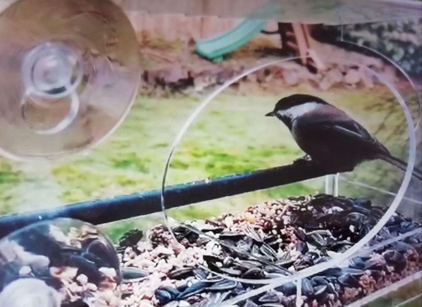 女儿家买了个新式鸟笼子_图1-3