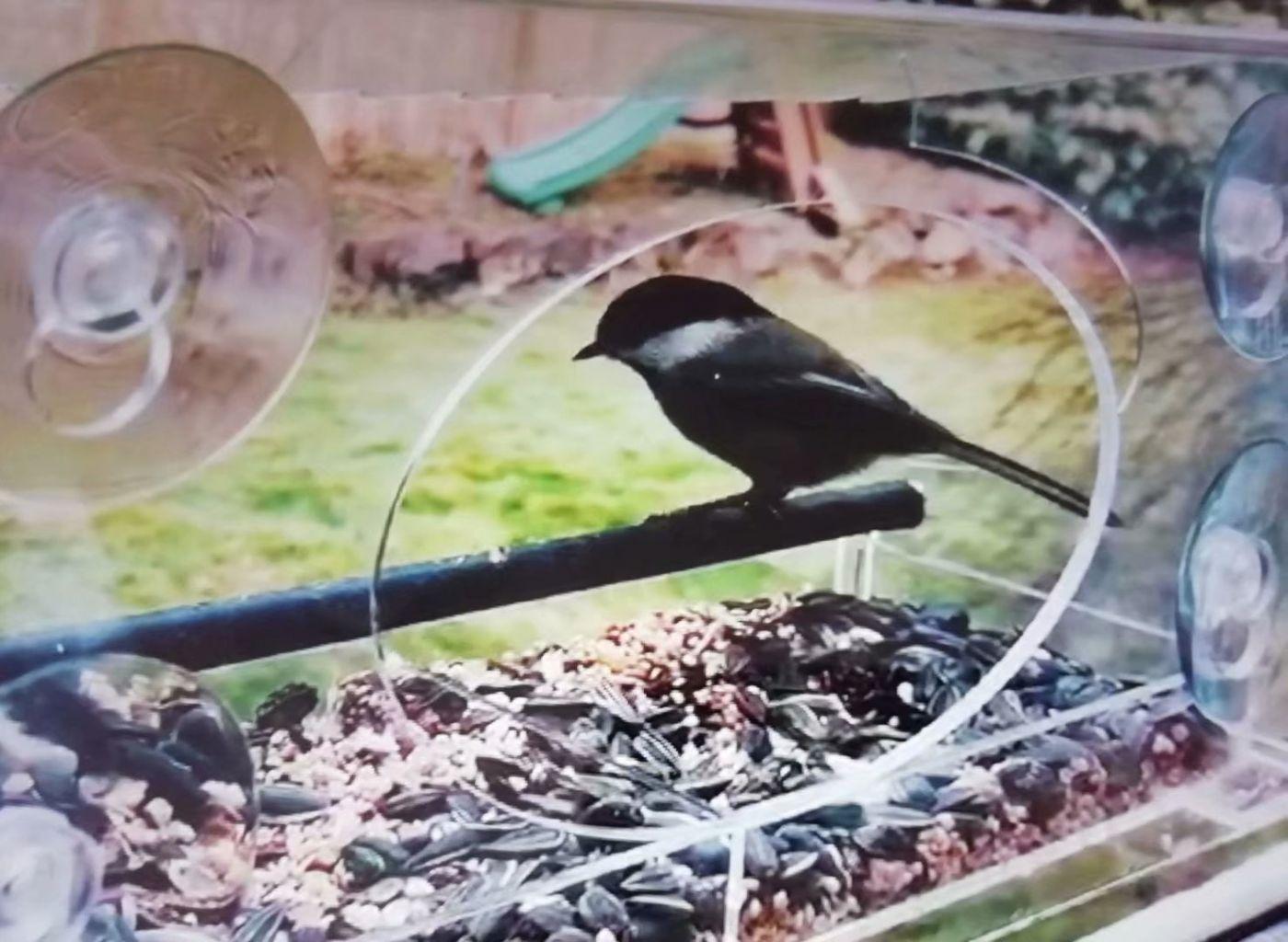 女儿家买了个新式鸟笼子_图1-4