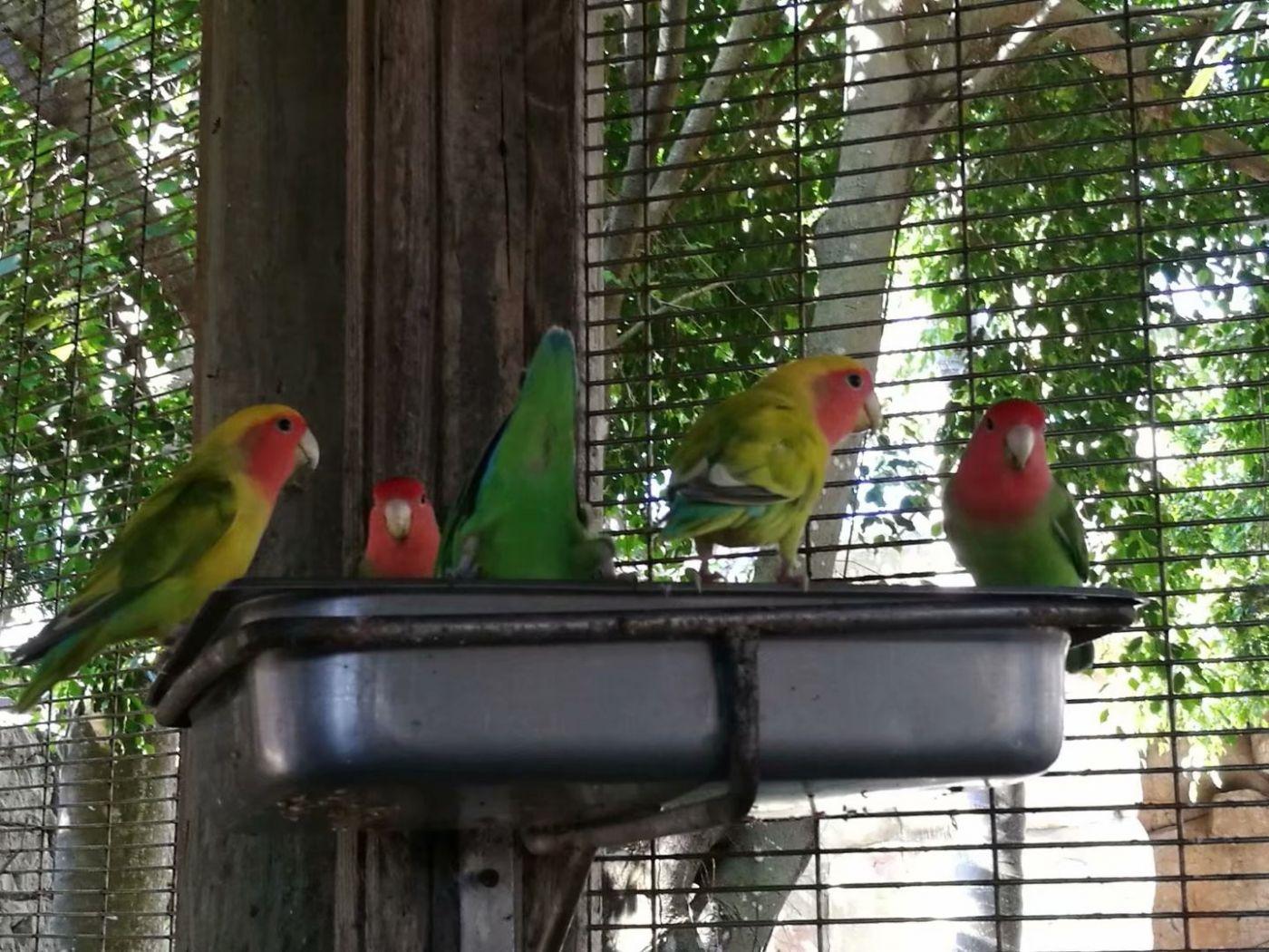 女儿家买了个新式鸟笼子_图1-7