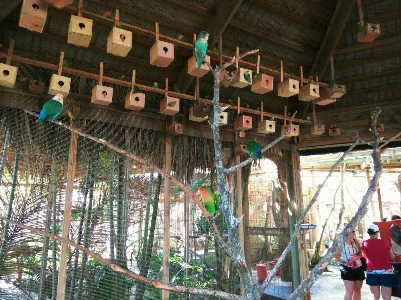 女儿家买了个新式鸟笼子_图1-8