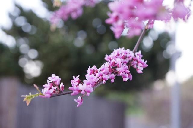 五月春--3_图1-10