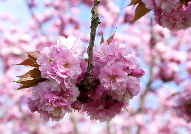 五月春--3_图1-16