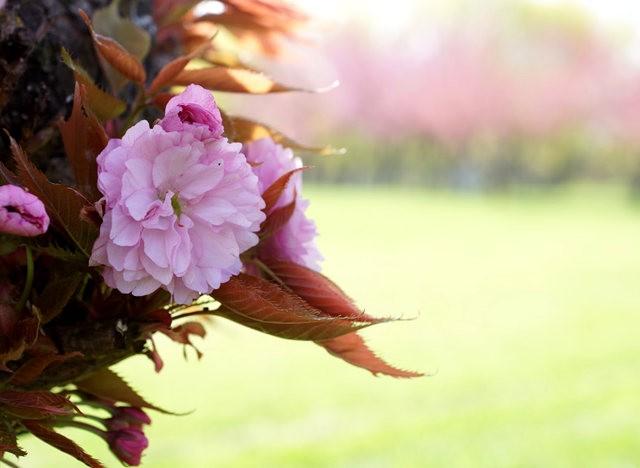 五月春--3_图1-17