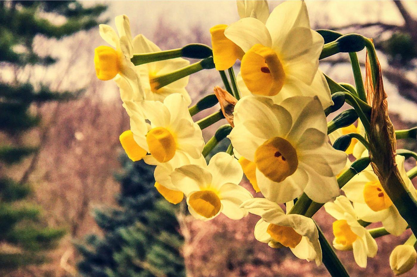 春天里百花开_图1-14