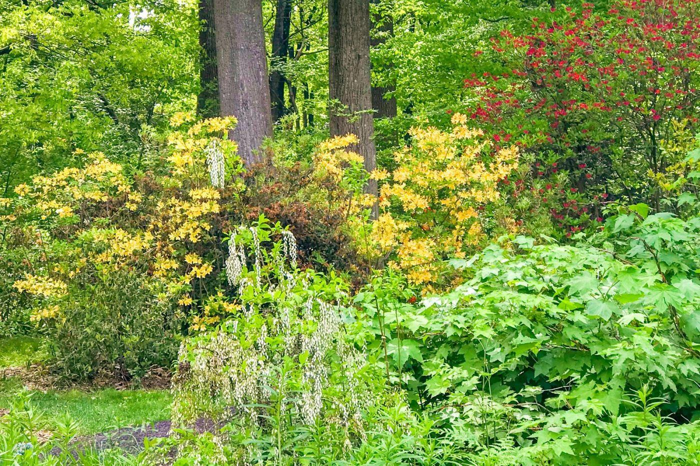 杜鹃花,路边的一幅画_图1-29
