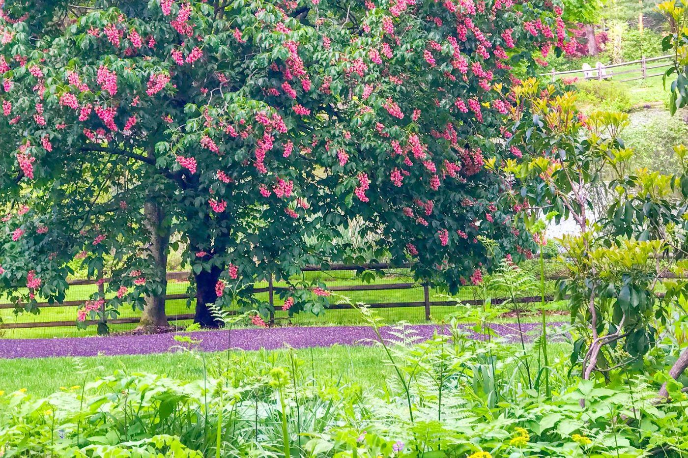 杜鹃花,路边的一幅画_图1-24