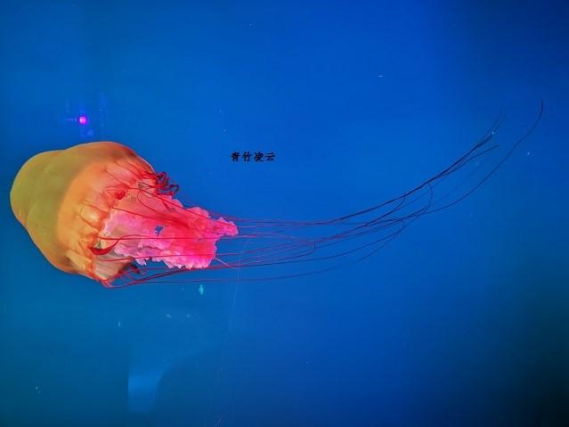 【青竹凌云】海底秀舞(原创摄影)_图1-1
