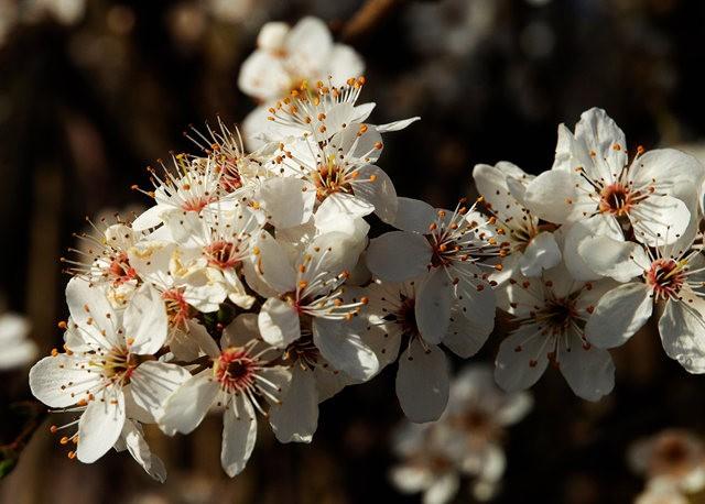 春花展枝头_图1-19