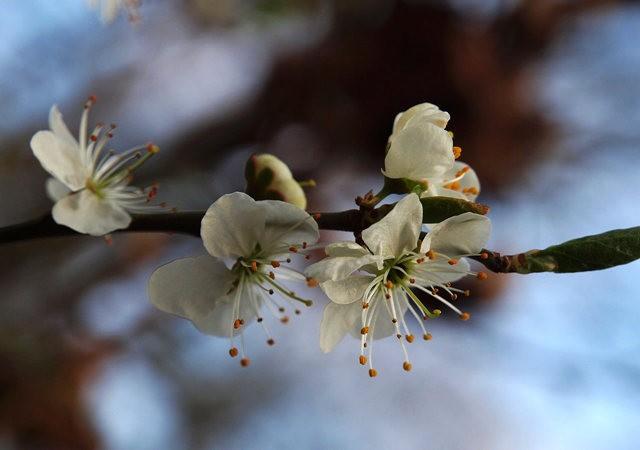 春花展枝头_图1-21