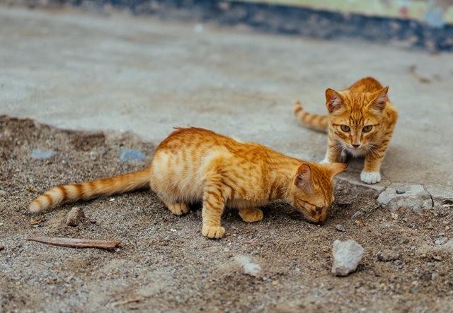 猫咪的传说_图1-2