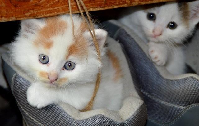 猫咪的传说_图1-3