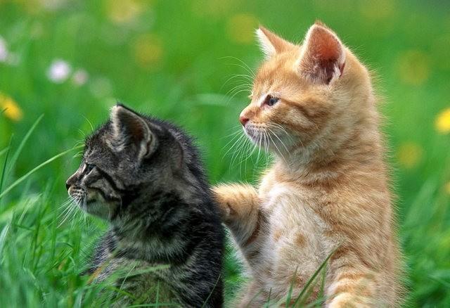 猫咪的传说_图1-4
