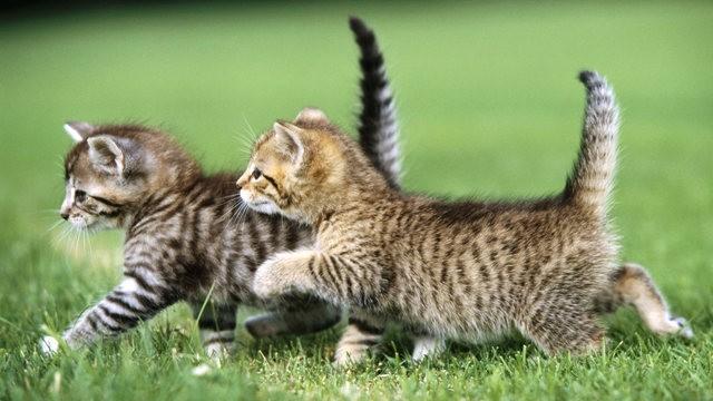 猫咪的传说_图1-5