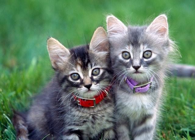 猫咪的传说_图1-6