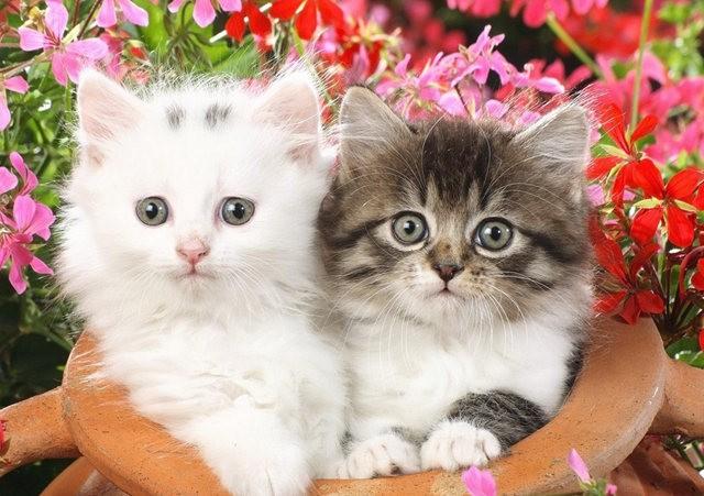 猫咪的传说_图1-7
