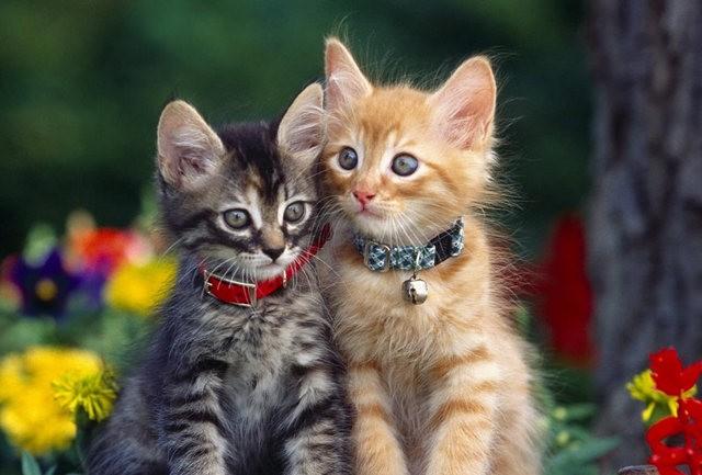 猫咪的传说_图1-8