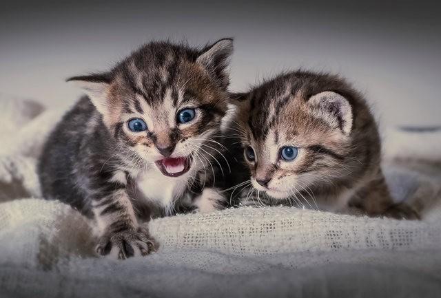 猫咪的传说_图1-9