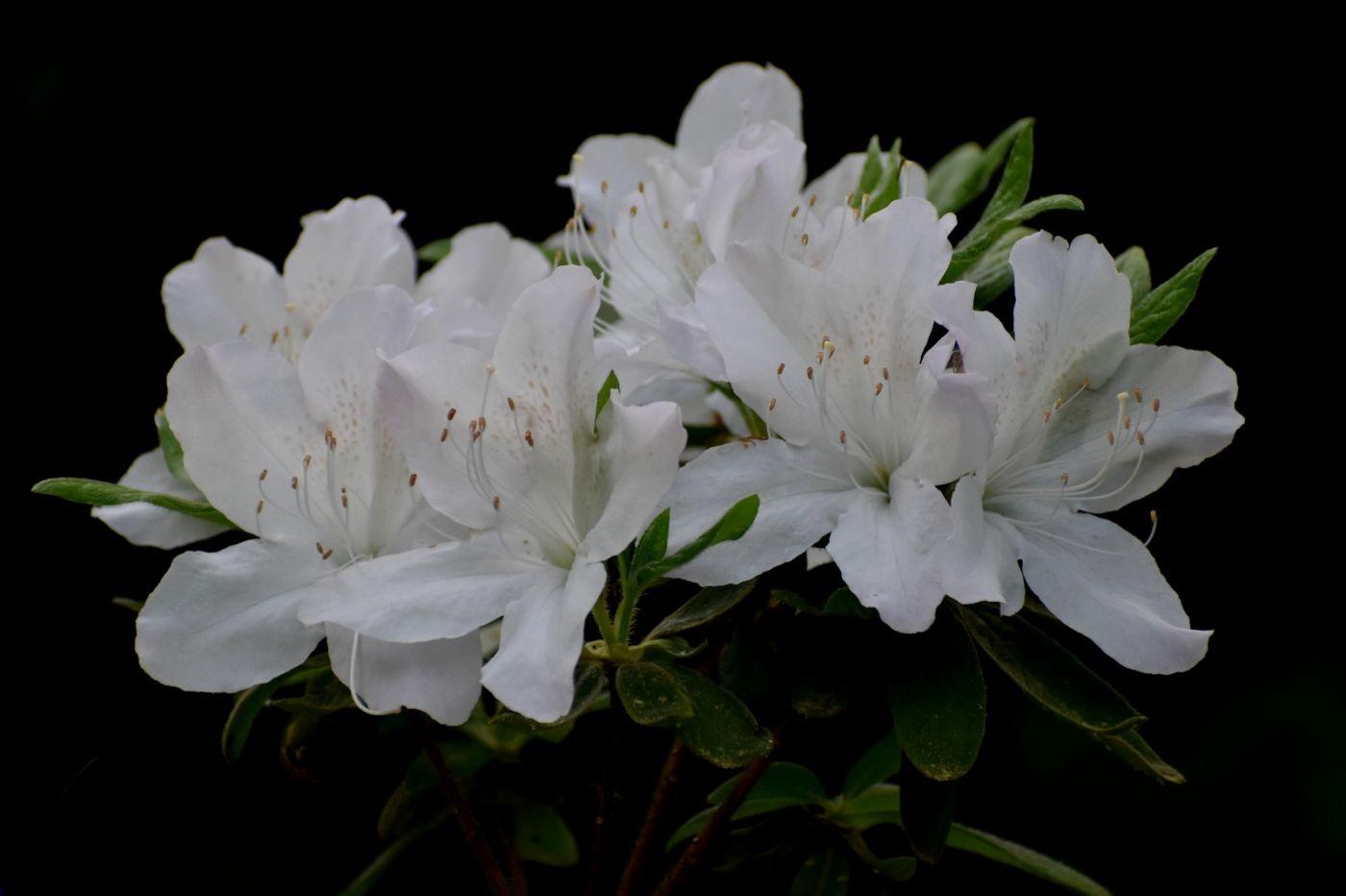 纽约 五月 花 (一)_图1-3