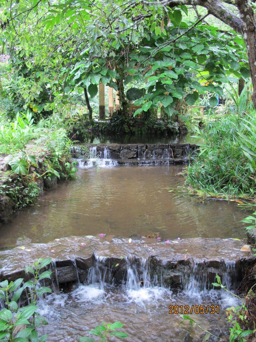 莫里热带雨林_图1-4