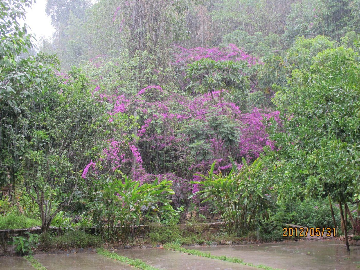 莫里热带雨林_图1-6