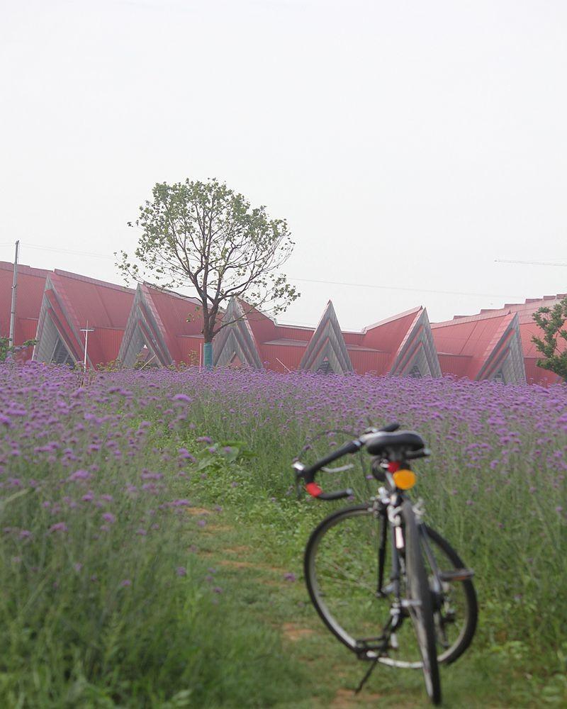 紫色花海_图1-4