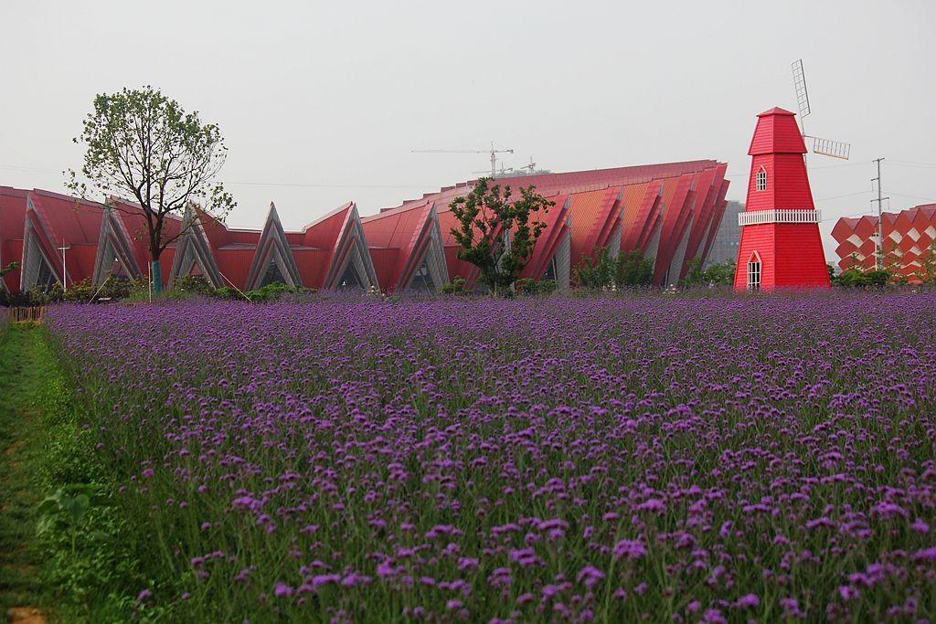 紫色花海_图1-2