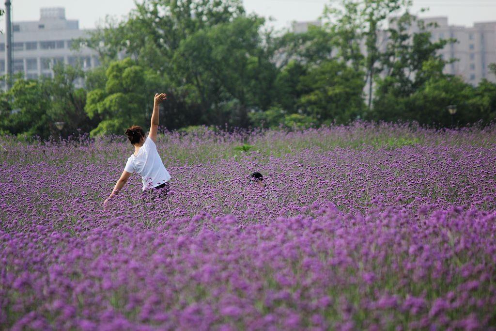 紫色花海_图1-1