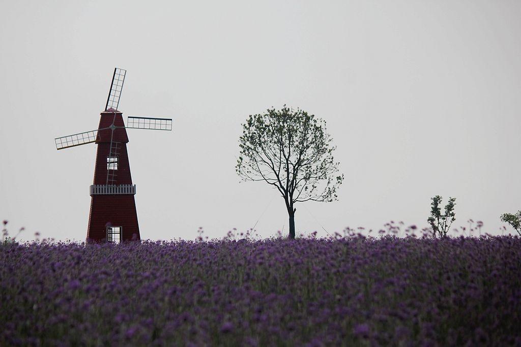 紫色花海_图1-10