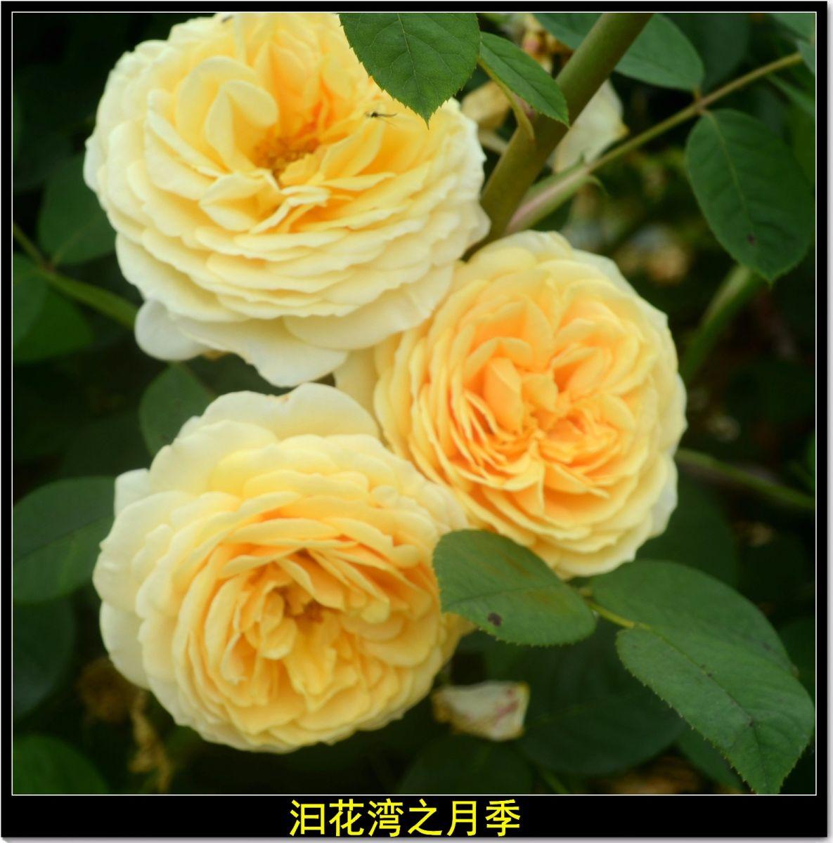 平江泊头记(诗文)_图1-17