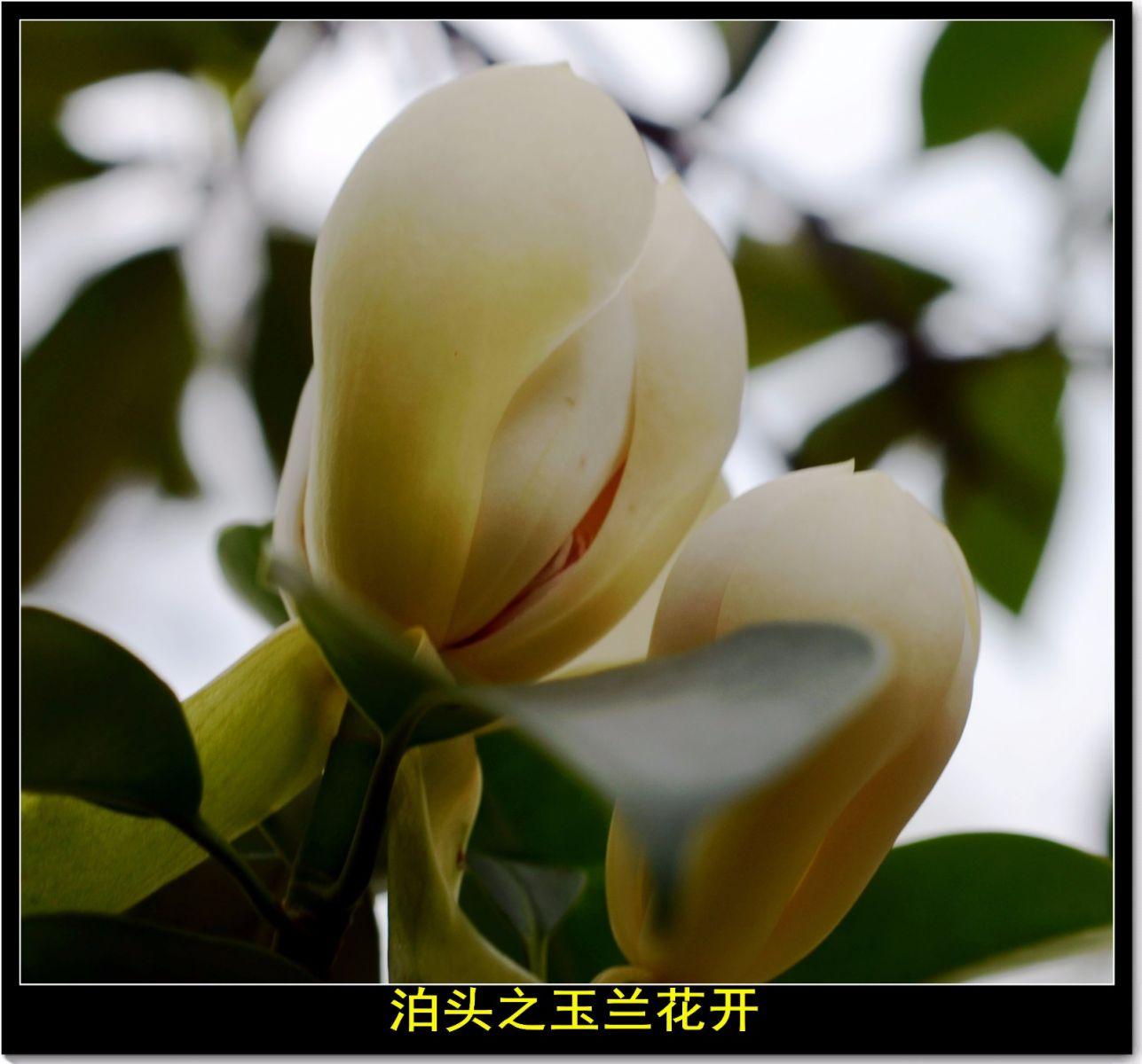 平江泊头记(诗文)_图1-5