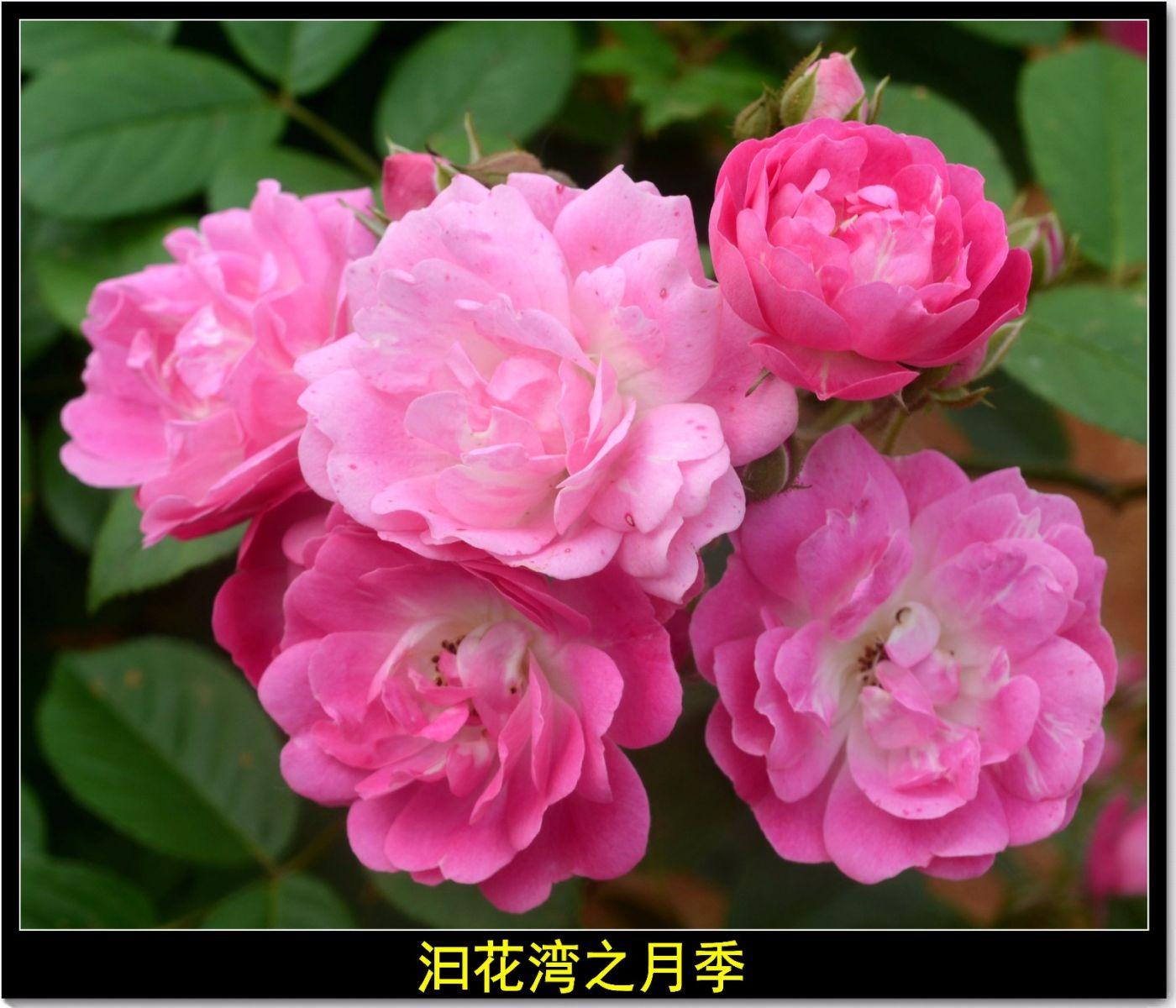 平江泊头记(诗文)_图1-3