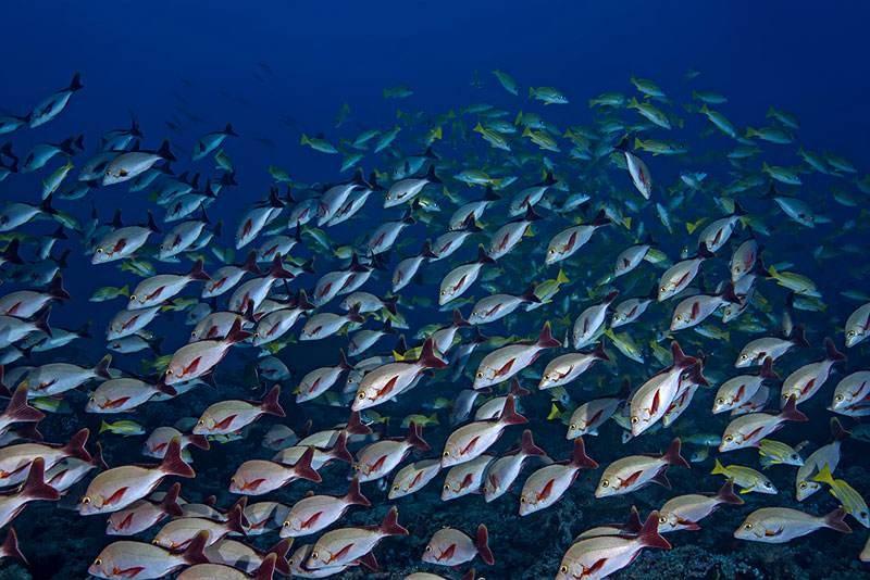 """心理学界必须认定并认真对待""""红鲷鱼效应""""_图1-1"""