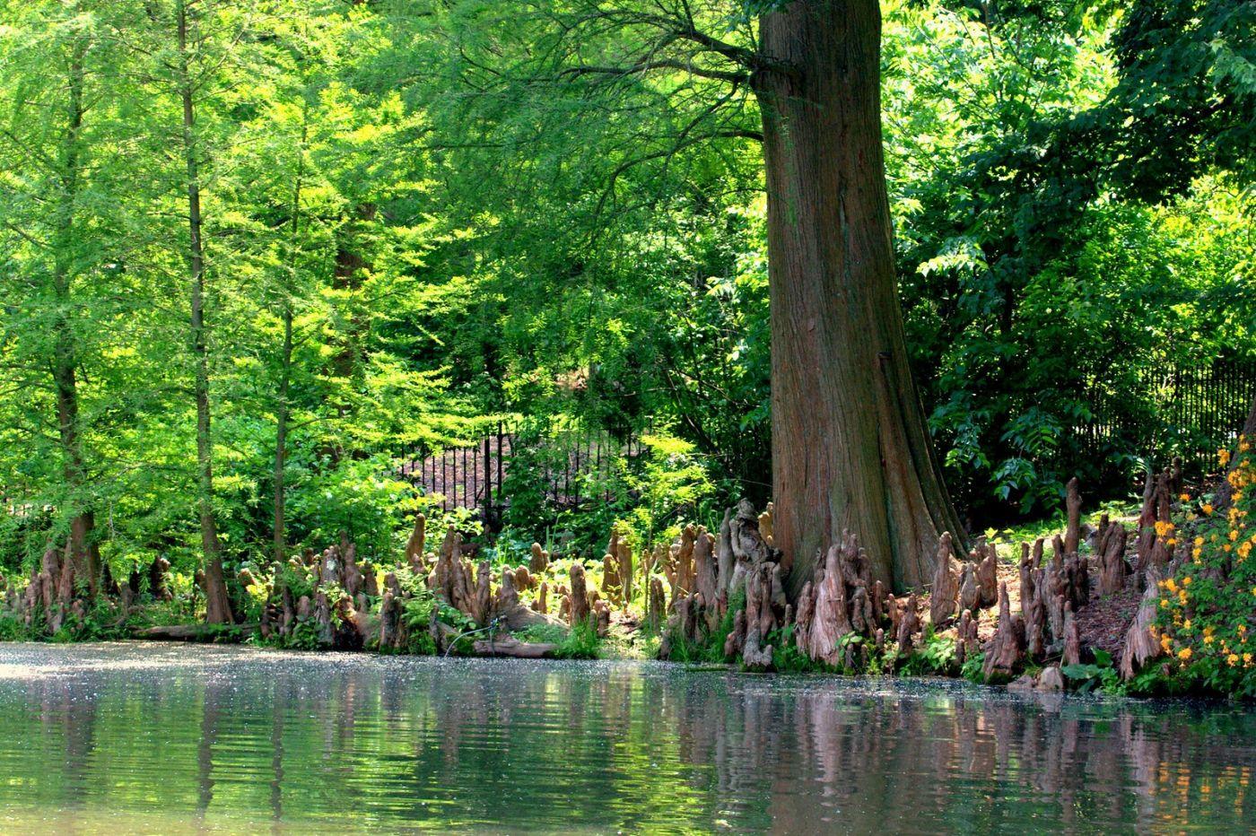 宾州长木公园,过往的记忆_图1-25