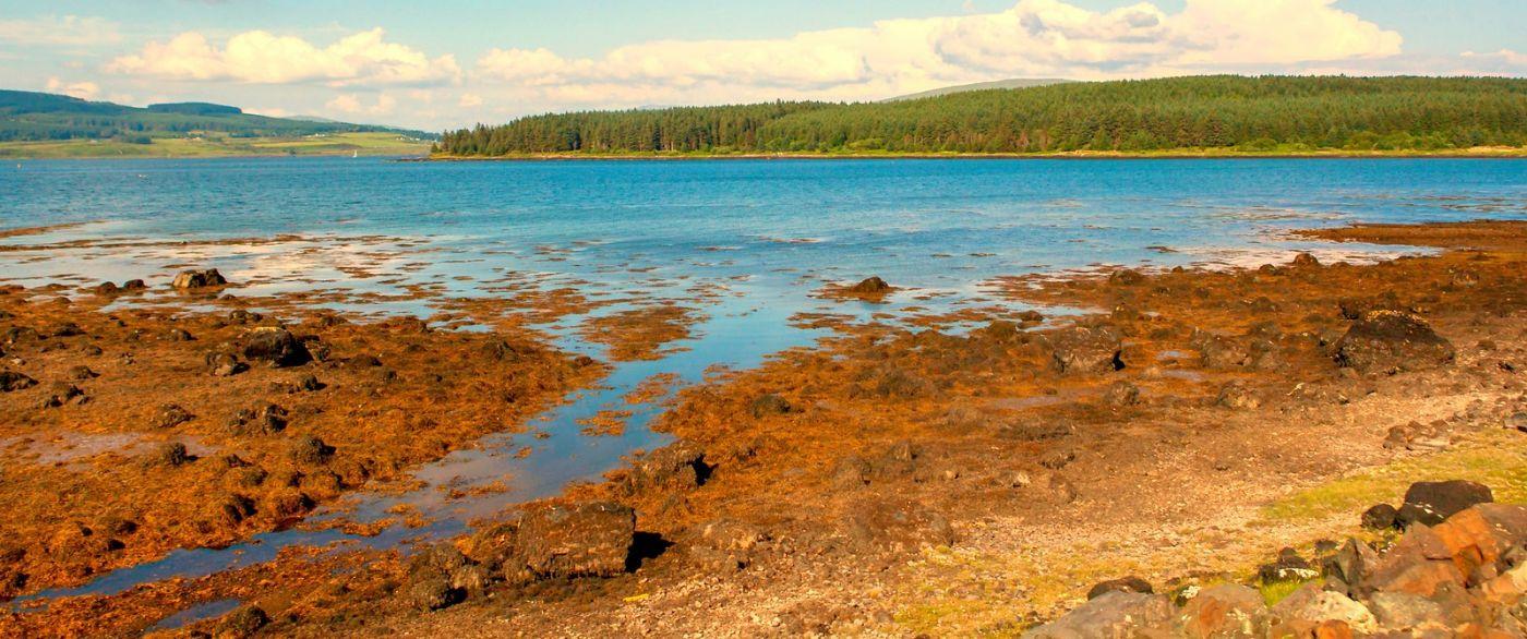 苏格兰美景,月牙般的海湾_图1-16