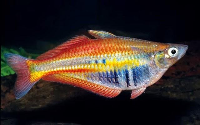 夏威夷的观赏鱼_图1-1