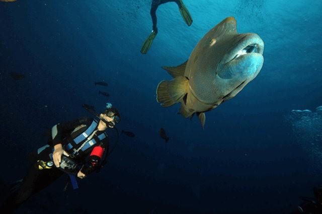 夏威夷的观赏鱼_图1-6