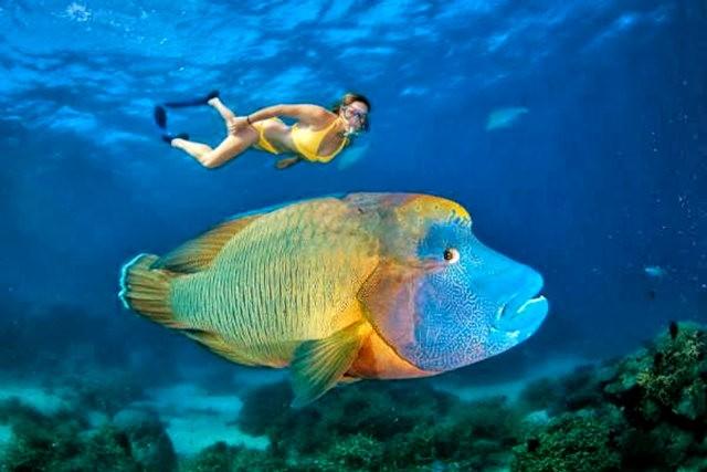 夏威夷的观赏鱼_图1-8