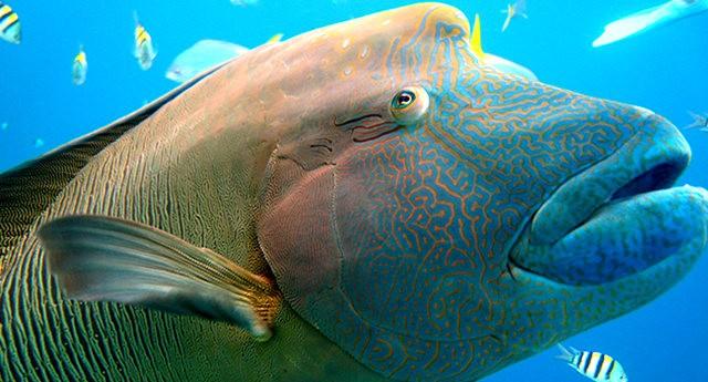 夏威夷的观赏鱼_图1-10