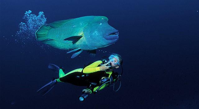 夏威夷的观赏鱼_图1-13