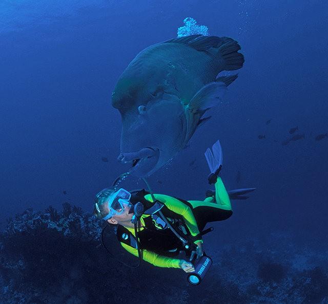 夏威夷的观赏鱼_图1-14